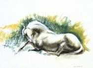 Horse Lying Down, (Camargue)
