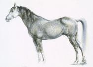 Dapple Grey Horse